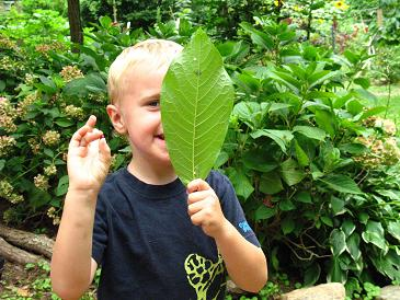 boy with leaf